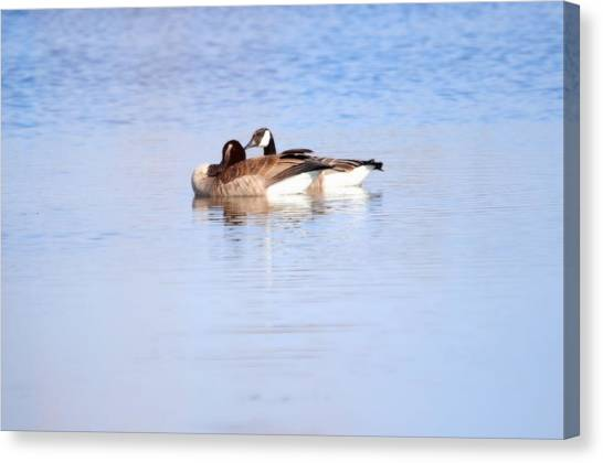 A Pair Of Geese Canvas Print by Valarie Davis