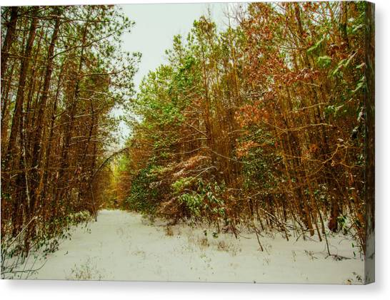 A Path In Winter  Canvas Print