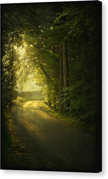 A Path To The Light Canvas Print
