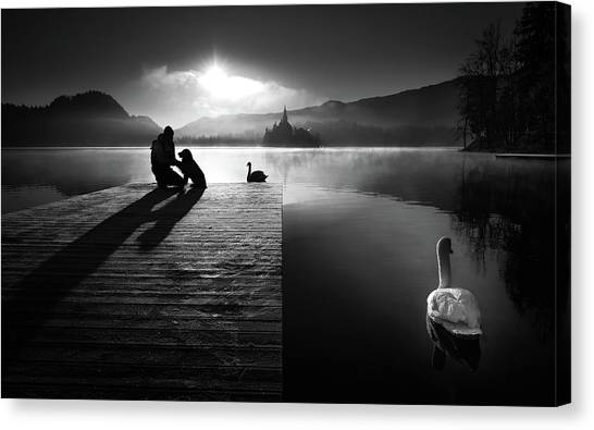 Swan Canvas Print - A Peaceful Morning At The Lake by Sandi Bertoncelj
