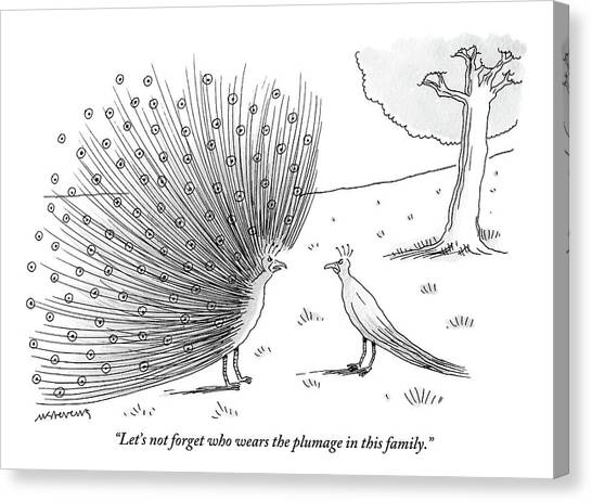 Peacocks Canvas Print - A Peacock With A Massive Coat Yells by Mick Stevens