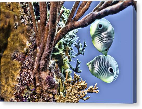 Two Butterfly Fish And Coral Reef Canvas Print