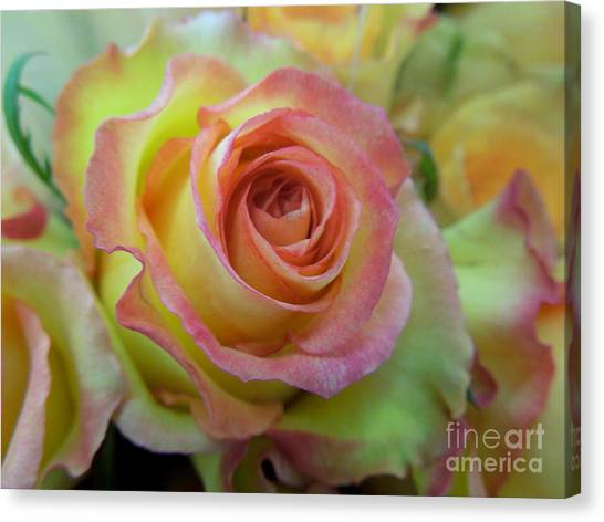 A Perfect Rose Canvas Print
