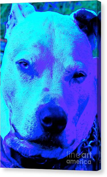 A Pit Bull's Love Is Forever// End Dog Fighting Canvas Print by Q's House of Art ArtandFinePhotography