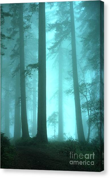 Redwood Forest Canvas Print - A Place Of Awe by Bob Christopher