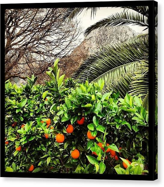 Orchard Canvas Print - A #postcard From #soller In #mallorca by Balearic Discovery
