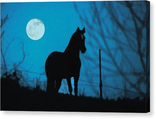 A Question Of Freedom Canvas Print