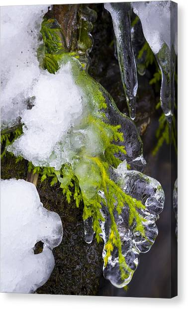 A Quick Freeze Canvas Print