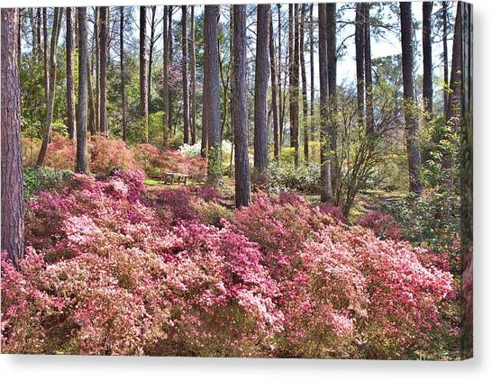 A Quiet Spot In The Woods Canvas Print