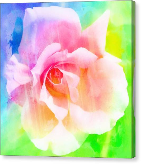 A Rainbow Of A Rose Canvas Print by Cathie Tyler