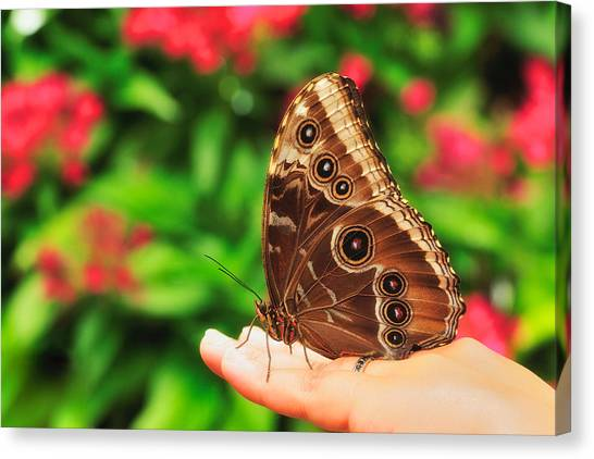 A Random Walk In The Butterfly Garden Canvas Print