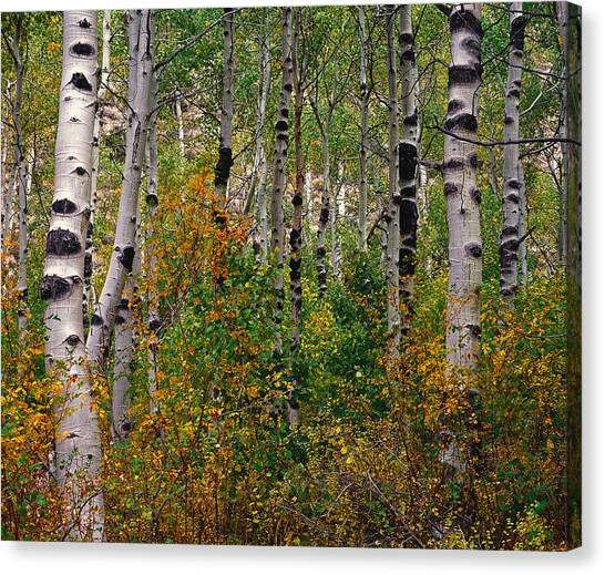 A Really Knotty View Canvas Print