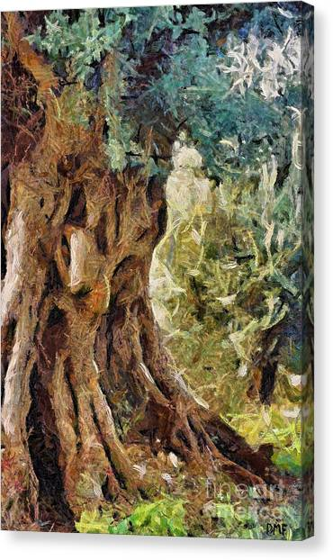 A Really Old Olive Tree Canvas Print
