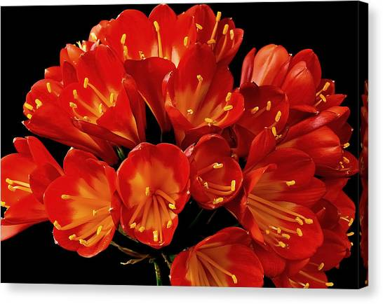 A Red Bouquet Canvas Print