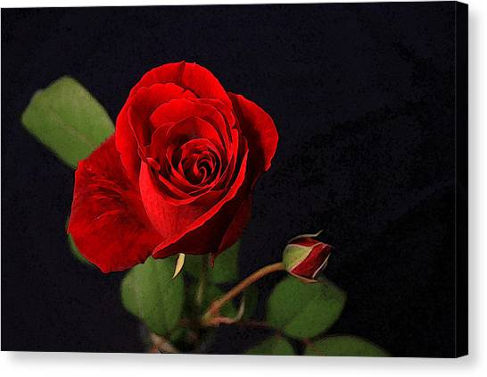 A Red Rose Canvas Print by CarolLMiller Photography