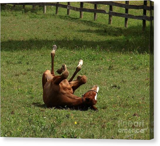 A Roll In The Hay Is For Horses Canvas Print