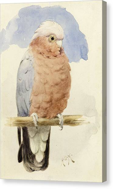 Cockatoo Canvas Print - A Rose Breasted Cockatoo by Henry Stacey Marks