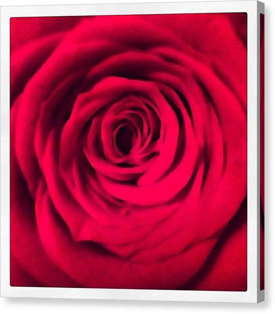 Canvas Print - A Rose Is A Rose - Thank U Gay Men's by Rosie Odonnell