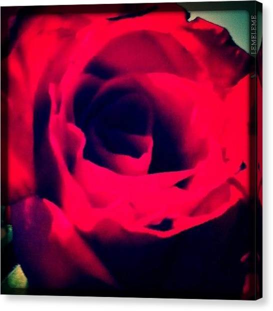 Red Roses Canvas Print - A Rose  by Stefanie Roberts