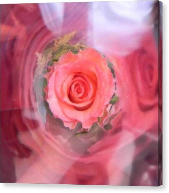 Valentines Day Canvas Print - A Rose With Its Reflection by Mariana  Marii
