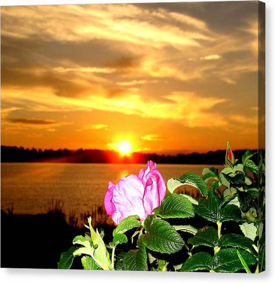 A Rosy Sunset In Maine Canvas Print