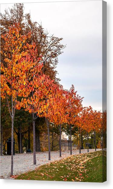 A Row Of Autumn Trees Canvas Print