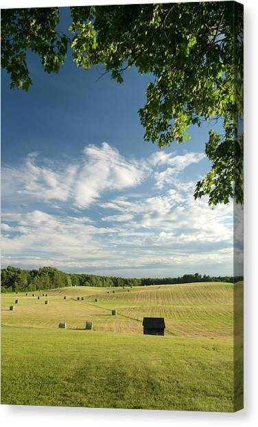 New Brunswick Canvas Print - A Rural Maine Field Bordered By Trees by Karsten Moran