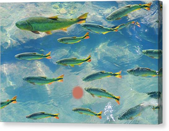 Art In America Canvas Print - A School Of Fish In The Clear Waters Of by Mint Images - Art Wolfe