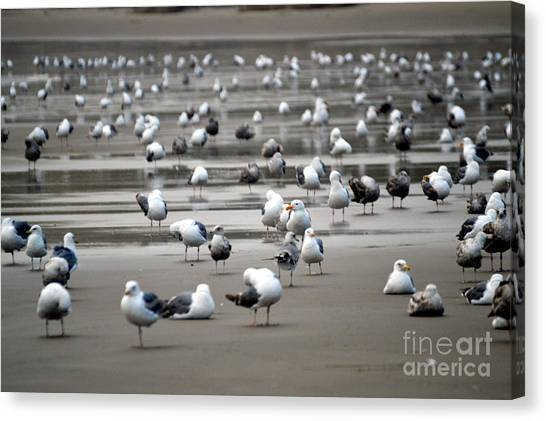 A Seagulls Life Canvas Print by Sheldon Blackwell