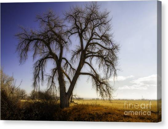 A Simple Tree Canvas Print