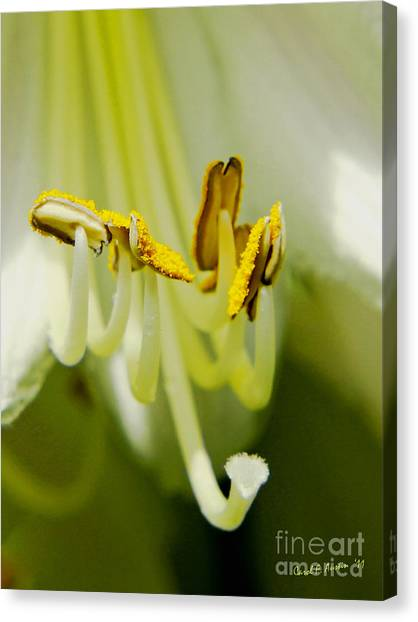 A Single Flower In Full Bloom Canvas Print
