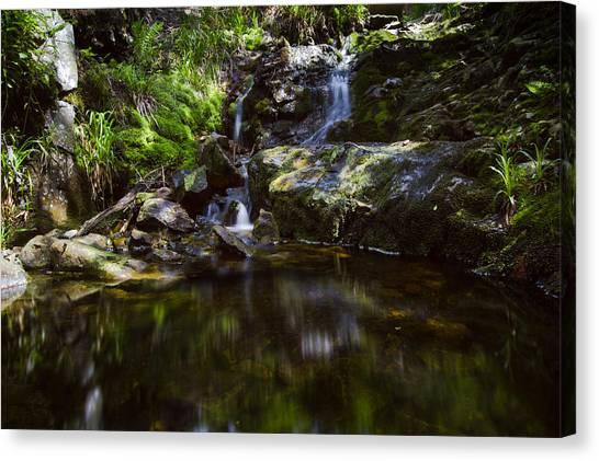 Mossy Forest Canvas Print - A Small Cooling Off? by Andreas Levi