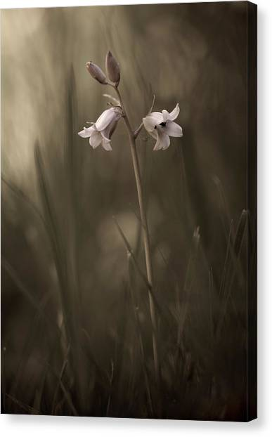 Grass Canvas Print - A Small Flower On The Ground by Allan Wallberg