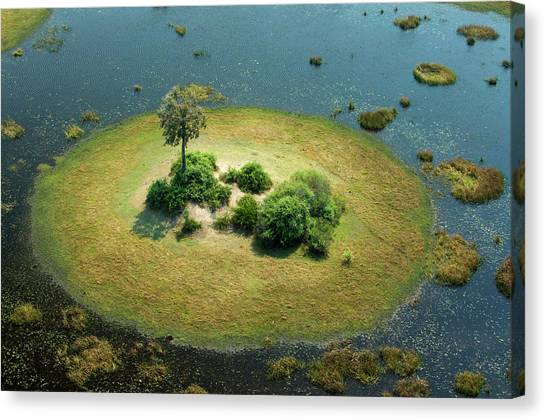 Okavango Swamp Canvas Print - A Small Island In A Wetland In Botswana by Beverly Joubert
