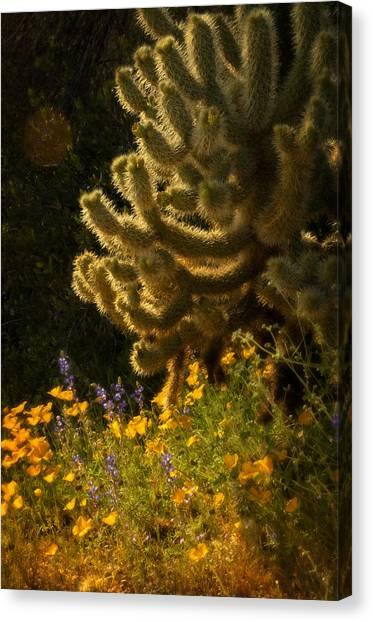 A Southwestern Spring  Canvas Print