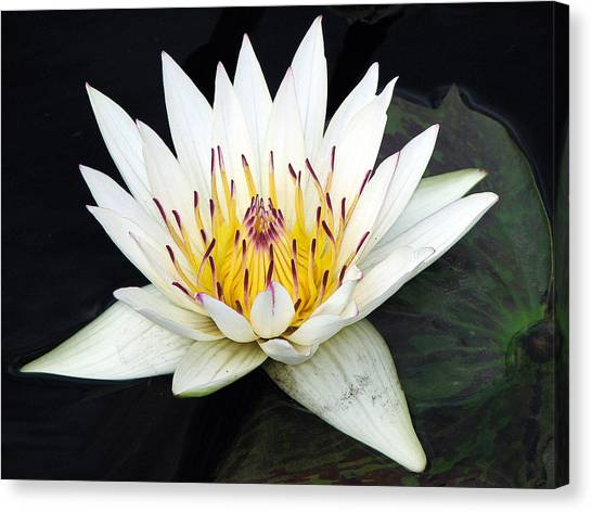 Canvas Print featuring the photograph Botanical Beauty by Rick Locke