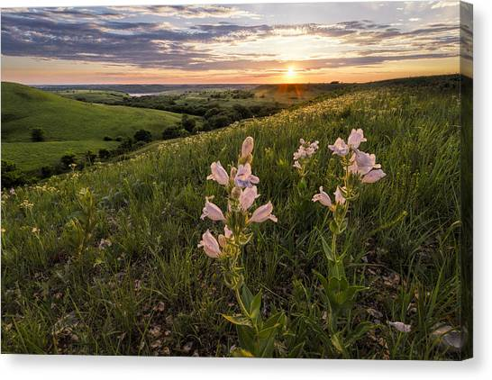 Rolling Hills Canvas Print - A Spring Sunset In The Flint Hills by Scott Bean