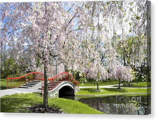 A Spring Walk Canvas Print