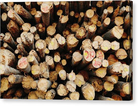 A Stack Of Cut Timber Logs, Lodge Pole Canvas Print