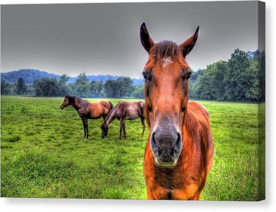 A Starring Horse Canvas Print