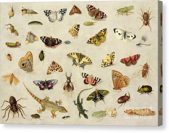 Grasshoppers Canvas Print - A Study Of Insects by Jan Van Kessel