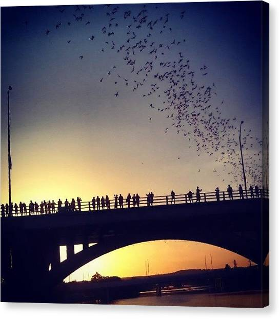 Bat Canvas Print - A Sunset And Hundreds Of Thousands Of Bats by Rebecca Kowalczik