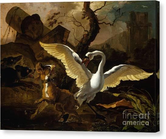 A Swan Enraged By Hondius Canvas Print