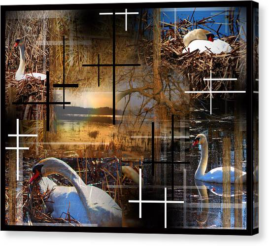 A Swans Mysterious World Canvas Print by Andrew Sliwinski