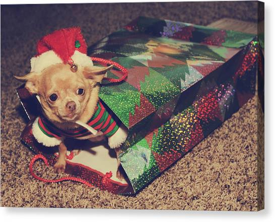 Chihuahuas Canvas Print - A Sweet Christmas Surprise by Laurie Search