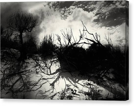 A Symphony Of Light And Shadows Canvas Print