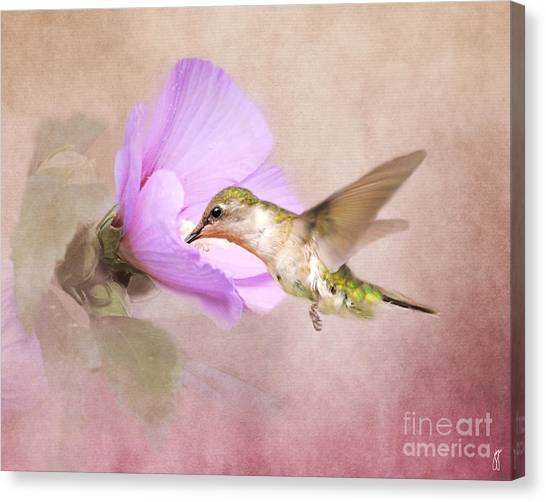 A Taste Of Nectar Canvas Print