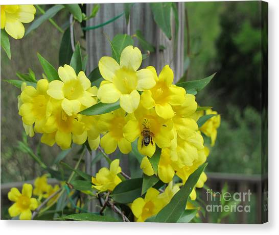 A Taste Of Yellow Canvas Print