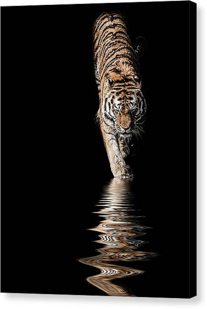 Tigers Canvas Print - A Time To Reflect by Paul Neville