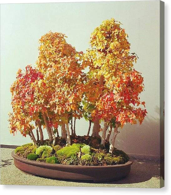 Smallmouth Bass Canvas Print - A Tiny Little Fall Bonsai Style by Jill Tuinier